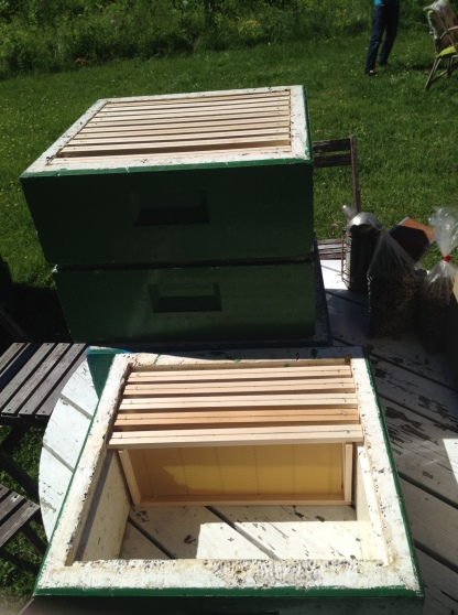 shallow honey supers all set to go on the hives
